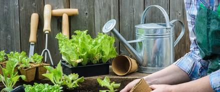 В ОПРФ предложили Правительству разработатьгоспрограмму поддержки дачников и огородников