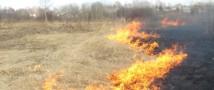Палы сухой травы– прямая угроза лесным территориям!