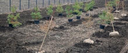 По программе «Наше дерево» в ООПТ Москвы посадят около 5 тысяч деревьев