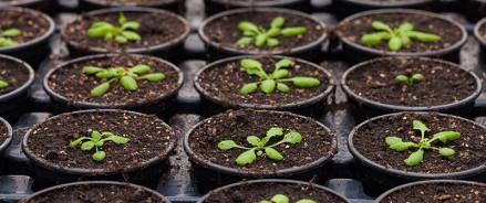 Сельские жители Татарстана безвозмездно получат рассаду и семена на 10 млн рублей
