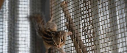 В Московском зоопарке проснулись бурундуки