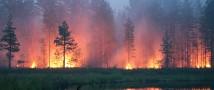 За неделю с 19 по 25 апреля лесопожарные силы ликвидировали 760 лесных пожаров в 43 регионах России