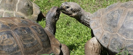 Черепахи переехали в уличный вольер