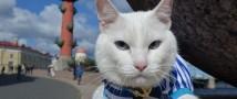 День эрмитажного кота 2021