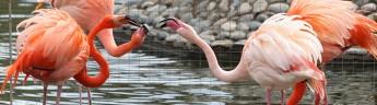 Фламинго вышли в уличный вольер