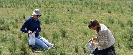 Географы МГУ исследуют восстановление экосистем заповедника «Черные Земли» после пожаров разных лет