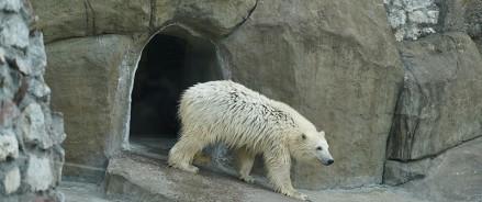 Голосование за имя белой медведицы в Активном Гражданине