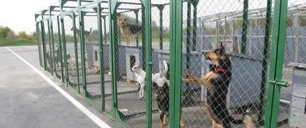 В Анивском районе Сахалинской области построят приют для животных