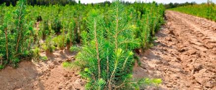 В Архангельской области предложили включить мероприятия по строительству новых лесных питомников в федеральный проект «Сохранение лесов»