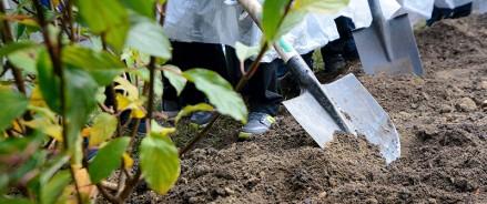 В Архангельской области высадят более миллиона деревьев и кустарников