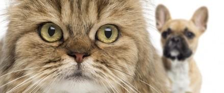 Законопроект о регистрации домашних животных глазами эксперта