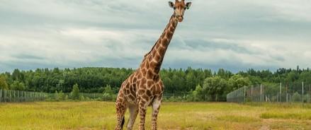 Московский зоопарк — временно закрыт Центр воспроизводства