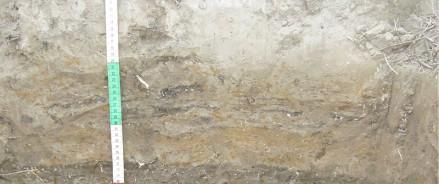 Ученые МГУ совместно с иранскими коллегами изучили состав почв, которые образуются на осушенном дне Каспийского моря