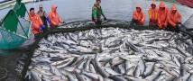 Ученые подсчитают поголовье тихоокеанских лососей