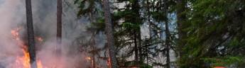 В Архангельской области введут особый противопожарный режим в лесах
