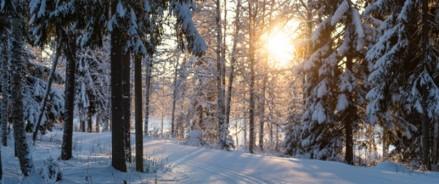 В Москве рассмотрят возможность обустройства дополнительной лыжной трассы в Терлецком лесопарке