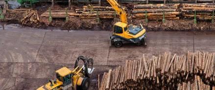 В красноярские леса идут биотехнологии