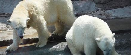 Выбрано имя белой медведицы