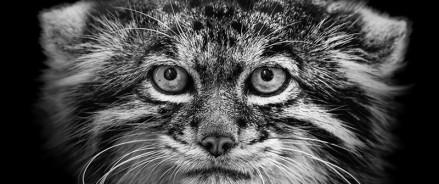 Фото животных из Московского зоопарка попали в международные галереи