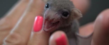 Московский зоопарк — у нас родились детеныши рукокрылых