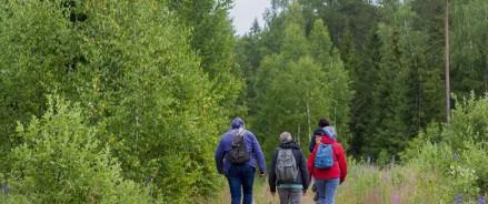 Посещение лесов для проведения туристических выездов разрешили во время особого противопожарного режима в Архангельской области