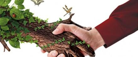 Выбираем Российское дерево года — 2021