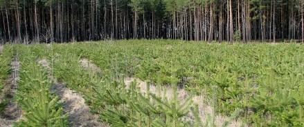 В 2021 году по нацпроекту «Экология» в Татарстане посажены леса на площади 1400 га