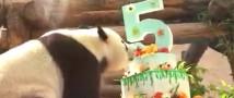 В Московском зоопарке прошел День рождения панд