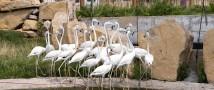 В казанском зоопарке поселились фламинго