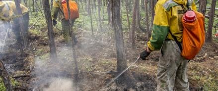 За неделю потушили 443 лесных пожара на общей площади, пройденной огнем, более 255 109 га.