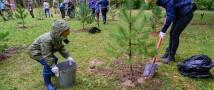 В Архангельской области высадят 257 тысяч деревьев