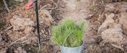 Росбанк и РусКлиматФонд посадят 80 тысяч деревьев