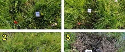 Самые уязвимые – папоротники, наиболее устойчивые – мхи: географы МГУ изучили влияние керосина на растительность
