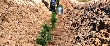 В октябре татарстанцы высадят миллион саженцев по акции «Сохраним лес»