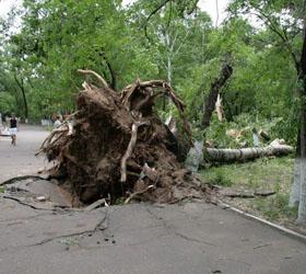 Сильнейший ураган и его последствия в Благовещенске ликвидируют пожарные, спасатели и полицейские