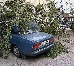 Из-за стихии в Ленинградской области обесточены несколько районов