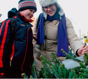 Новогодние елки могут серьезно повредить здоровье