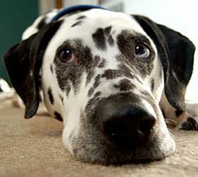 В Англии потерявшаяся собака самостоятельно доехала до приюта для животных