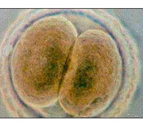 Ученые объявили о создании технологии клонирования человека
