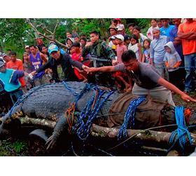 На Филиппинах обнаружен самый большой крокодил в мире