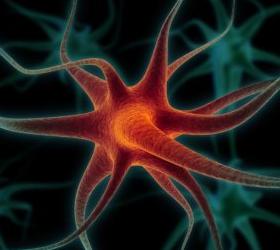 Американскими медиками разработан способ быстрого сращивания разорванного нерва