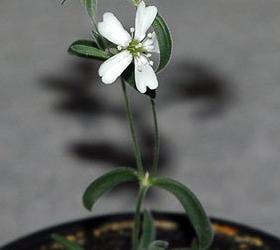Российские учёные оживили растение спустя 30 тысяч лет