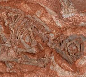 В Африке найдено древнейшее «гнездо» динозавров