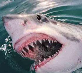 Акулы снова угрожают отдыхающим на египетском курорте