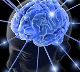 Ученые обнаружили ген, отвечающий за интеллект