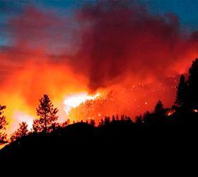 Обед в лесу обошелся жителю Бурятии почти в 3,5 млн рублей