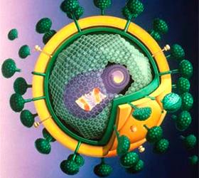 В Штатах одобрили первое средство для профилактики ВИЧ