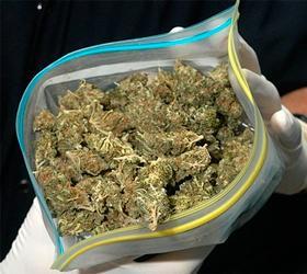 Наркоторговцы спрятали большую партию марихуаны на кладбище