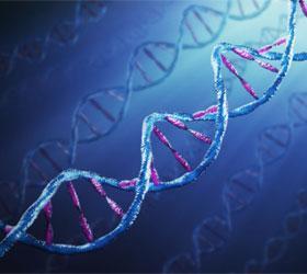 Ученые смогли записать в молекулу ДНК целую книгу