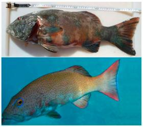 Ученым впервые удалось обнаружить рак кожи у диких рыб